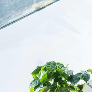 吊燈燈具盆栽三居椅凳東南亞風格陽臺裝修效果圖