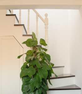 DREAM楼梯口